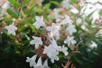 早朝、花撮り - FUJIFILM Xシリーズで撮るフォトブログ