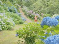 アジサイ:大仏公園(弘前市)*2016.07.11 - 津軽ジェンヌのcafe日記