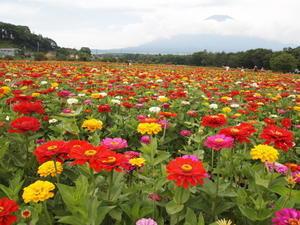 花の都公園 - 四季の風