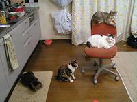 木曜日160818 - ぶつぶつ独り言2(うちの猫ら2016)