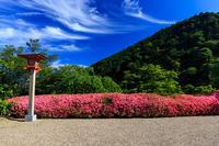 善峯寺のサツキ光景 - 花景色-K.W.C. PhotoBlog