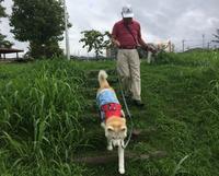 大型犬用ドッグカートのあれこれ - 秋田犬「大和と飛鳥丸」の日々Ⅱ