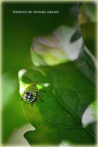 昆虫さんこんにちは Nikon D800 - ひとみの興味津々でございます!日々のブログ