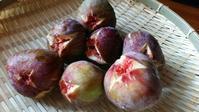 小林麻央さん - 料理研究家ブログ行長万里  日本全国 美味しい話