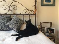 ベッドの上にて、にゃんこナウ - にゃんこと暮らす・アメリカ・アパート