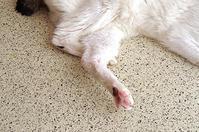 またへんな足組で寝てるよ。 - ぶつぶつ独り言2(うちの猫ら2016)