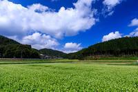 犬甘野の蕎麦畑(亀岡市) - 花景色-K.W.C. PhotoBlog