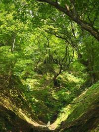 オクヤマは山霧の朝に・・・・・・朽木小川・気象台より - 朽木小川・気象台より、高島市・針畑郷・くつきの季節便りを!