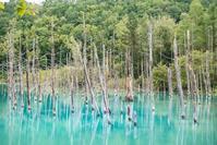 台風後の青い池 - Nature Photo 森の声
