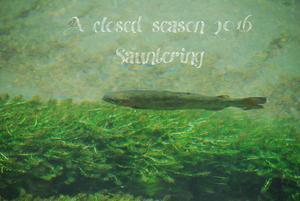 A closed season 2016 - Sauntering
