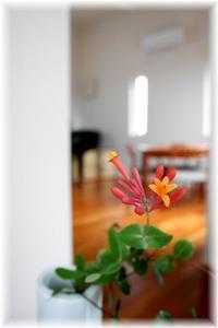 今日の花と今日のコーディネート - Less is more