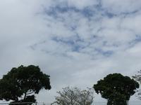 台風一過と冷やし中華 - はまあやのくらし