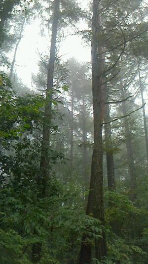雨・あめ・アメ・・・ - 木洩れ日の森から