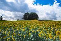 秋なのに夏の光景 - Nature Photo 森の声