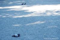 鳩サブレー座り - 渋谷のつま先