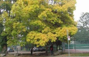 秋の到来 - 風のたより from バンクーバー