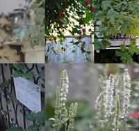 久しぶりのお庭 と ジェラート - my story***