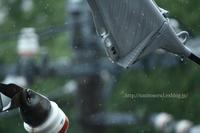 雨の日に - 一瞬をみつめて