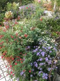 花園?いいえ手抜き庭 - 花の自由旋律