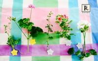 ゼラニウムたち  - Bouquets_ryoko
