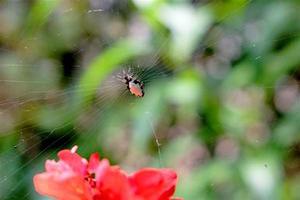 銀メッキゴミ蜘蛛 - 世話要らずの庭