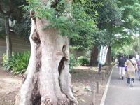 上野の森 - 絵を描きながら