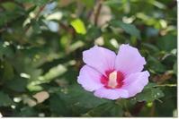 近所の花(9・16) - 花日記