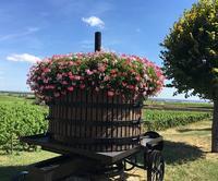 8~9月のフランス ⑨ブルゴーニュで一番好きなChambolle-Musigny - wine-memory 2