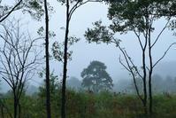 霧ヶ谷湿原 - 源爺の写真館