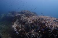 16.9.29 リーフチェック - 沖縄本島 島んちゅガイドの『ダイビング日誌』