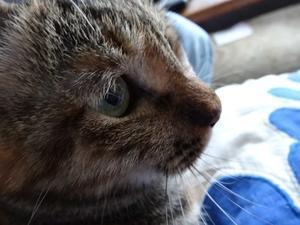 吾輩は猫である - 隼と備中鍬