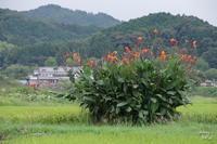 明日香村岡  画像一掃困ったかんな - ぶらり記録(写真) 奈良・大阪・・・