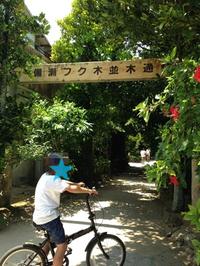 沖縄の旅・2016~備瀬のフクギ並木~ - カーリー67 ~ka-ri-style~