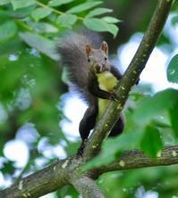 北の森からエゾリスと野鳥便り - エゾリスと森の仲間たち
