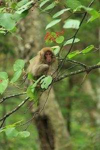 お猿 - 傍らにある風景