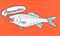 本日のイラスト その253(鮭を食べよう) - hacmotoのフォルダ