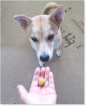 よ~いドン! - 番犬ハナとMIX犬サクのおさんぽ毎日