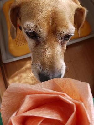 10月ですねー - ビーグル犬・ビーズ2