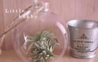 セリアのプラステイックのテラリウムボトルにエアプランツ!!~軽くて割れない!! - Little hobby