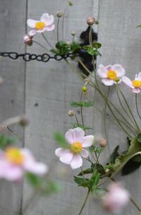秋のお庭 - my story***