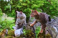 世界ネコ歩き イングランド - ときどき☆タス