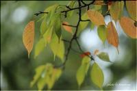 秋を撮る vol.7 - 今日のいちまい