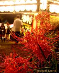 きらきら花の火 ー渋谷の秋祭り3 - 渋谷のつま先