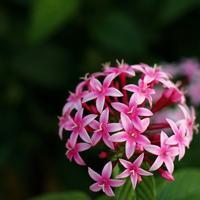 11月のホリスティックアロママッサージはプレゼント付♪ - 神戸市垂水区 Petit Lapin~プチ・ラパン~