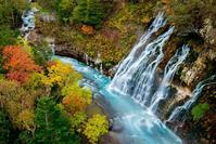 季節を感じる - Nature Photo 森の声