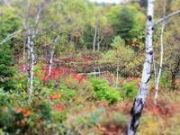 初秋の自然満喫の旅 3日目 - 花と写真と