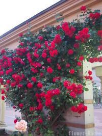 優雅なティータイムのお庭がイメージ。バラの花を育てよう。 - ルーシュの花仕事
