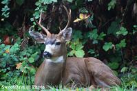 庭に現れるいろんな動物たち - Cute visitors in our back yard - SweetDays @ Photo