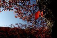 ささやかに紅葉 #01 - Yoshi-A の写真の楽しみ