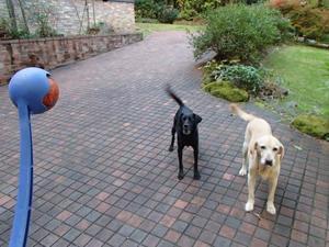午後のボール遊び - burnet hillのパートナーたち